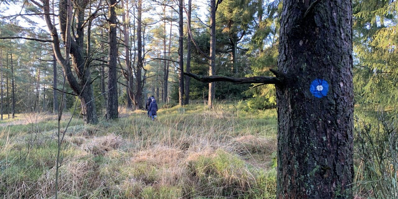 Åstarpe mosse – nära men ändå vildmark