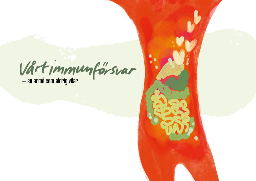 Vårt immunförsvar – en armé som aldrig vilar