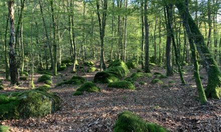 Upptäck Göstorp skog!
